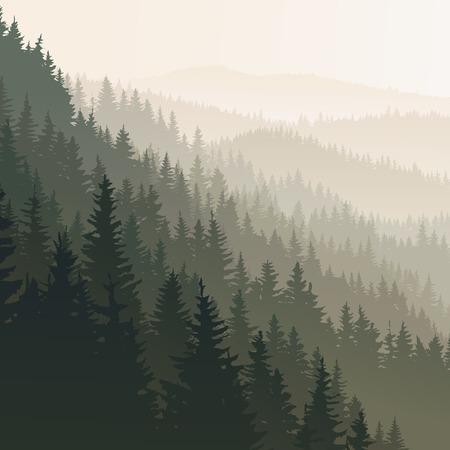 coniferous forest: paisaje cuadrado de bosque de coníferas salvaje en niebla de la mañana en el tono de color verde oscuro.