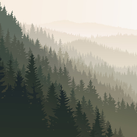 square landscape of wild coniferous forest in morning fog in dark green tone.