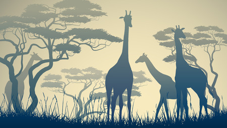 camelopard: Horizontal vector illustration of wild giraffes in African savanna with trees.