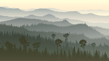 misty forest: Horizontal illustration of morning misty coniferous forest hills. Illustration