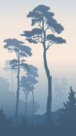 bosk: Vertical illustration of morning coniferous forest with tall pines (in blue tone). Vectores