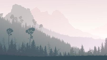 coniferous forest: ma�ana brumosa colinas con bosques de con�feras de monta�a en la niebla.