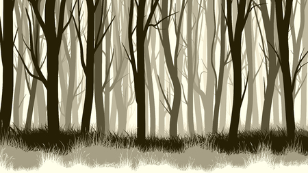 fog forest: Horizontal illustration of forest with trees and grass. Illustration