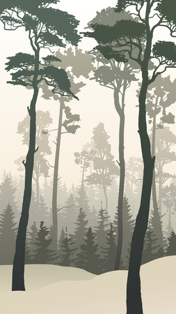 Vertical illustration of winter coniferous forest with tall pines. Illustration