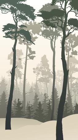 Vertical ilustración de los bosques de coníferas de invierno con altos pinos.