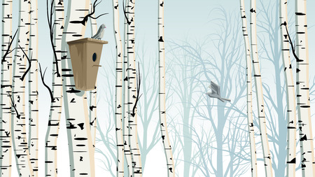 Horizontal illustration of birch trunks forest with birdhouse and bird.