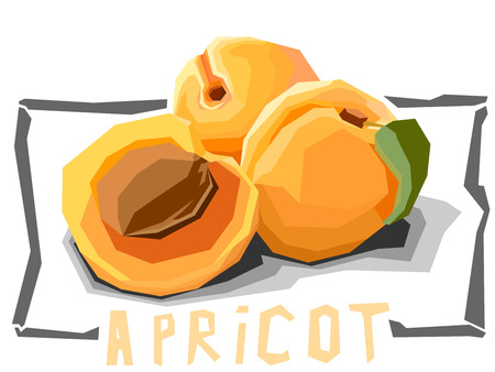 apricots: Vector simple illustration of apricots with half in angular cartoon style.