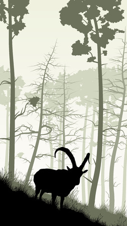 hillside: Vertical illustration of grassy hillside and coniferous wood with mountain goat.