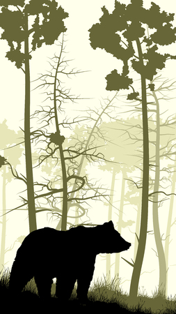 hillside: Vertical illustration of grassy hillside and coniferous wood with bear.