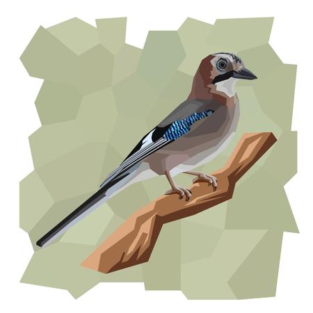 jay: Vector simple illustration of jay bird on branch  in angular cartoon style.