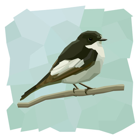 pied: Vector simple illustration of pied flycatcher bird on branch in angular cartoon style.