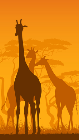 Vertical vector illustration of wild giraffes in African savanna with trees. Illustration