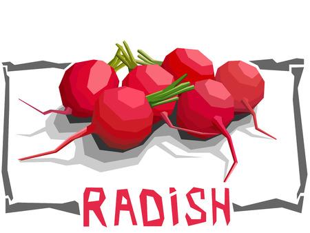 vegatables: Vector simple illustration of radish in angular cartoon style. Illustration