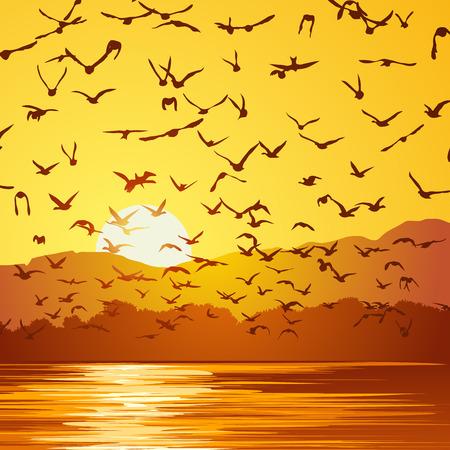 cuadrado del vector ilustración bandada de pájaros al atardecer cerca de la costa. Ilustración de vector