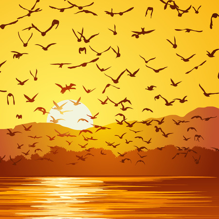 Square vector illustration flock of birds at sunset near coast.