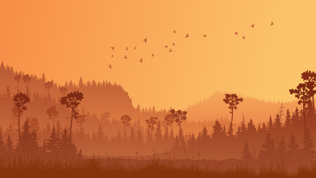 Horizontal abstract illustration of coniferous forest with grass at sunset.