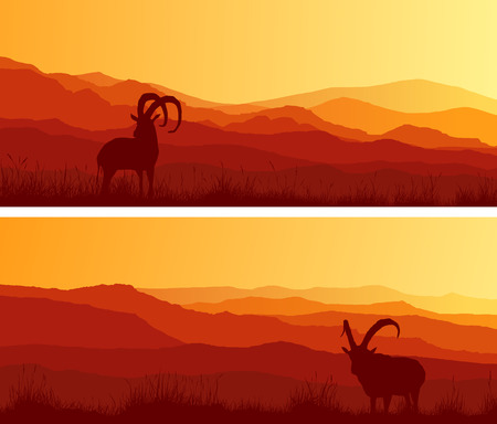panoramic nature: Set of horizontal wide banners of goats grazing in meadows at sunset.
