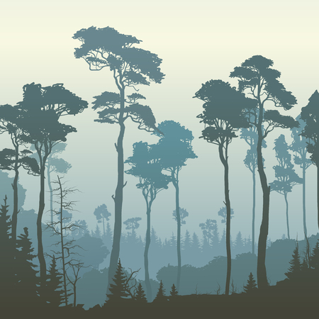 bosk: Square illustration of morning coniferous forest with tall pines (in blue tone).