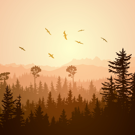 thickets: Square illustration foggy coniferous forest hills with flock of birds at sunset.