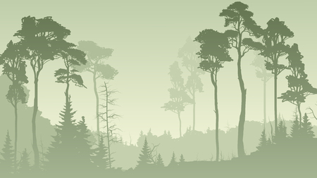 Horizontal illustration of morning misty coniferous forest in green tone. Ilustrace