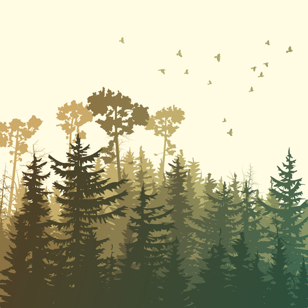 Square illustration of forest with green coniferous trees (sequoia) and birds.