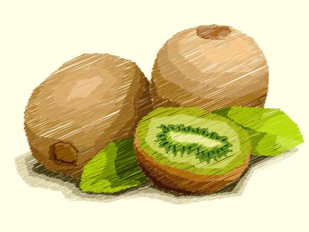 Vector illustration graphic arts sketch of drawing fruit kiwi with half. Illustration