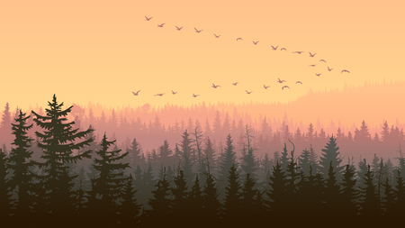 Horizontal illustration foggy coniferous forest with flock of birds at sunset. Ilustrace