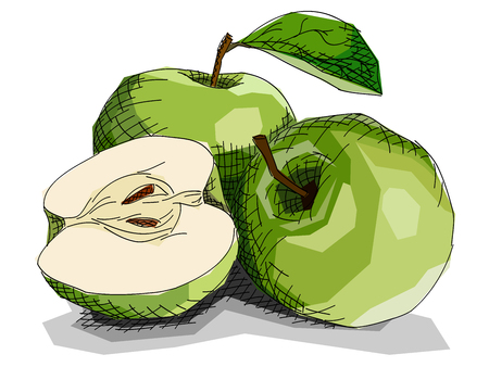 Illustration graphic arts sketch of drawing fruit green apples with half. Illustration