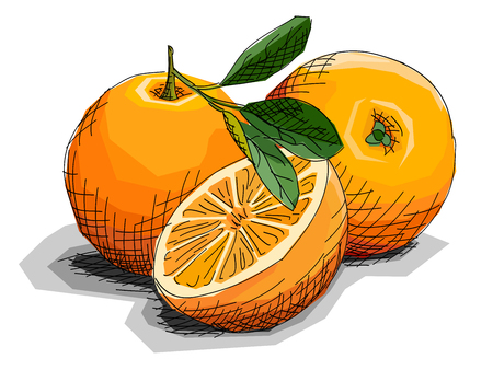 Illustration graphic arts sketch of drawing fruit oranges with half. Vectores