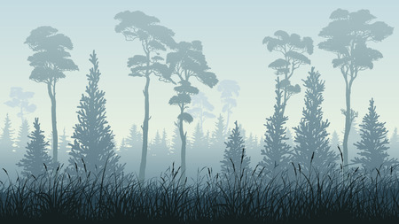 Horizontal illustration of green blue misty coniferous forest (spruce, pine, cedar) with grass. Illusztráció