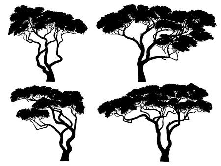 Set di sagome vettoriali di alberi di acacia africana. Vettoriali