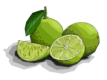 Vector illustration graphic arts sketch of drawing fruit limes with half. Stock Illustratie