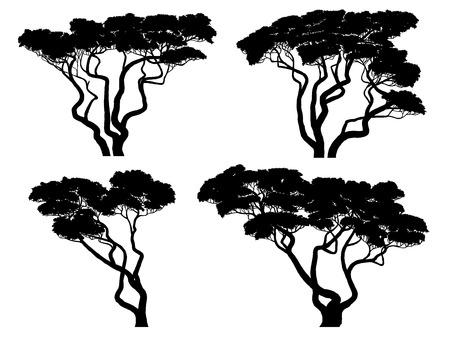 Set von Vektor-Silhouetten von afrikanischen Akazien.