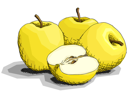 Vector illustration graphic arts sketch of drawing fruit yellow apples with half.