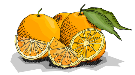Vector illustration graphic arts sketch of drawing fruit oranges with halves.