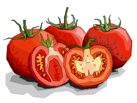Vector illustration sketch of drawing vegetable tomatoes with halves.