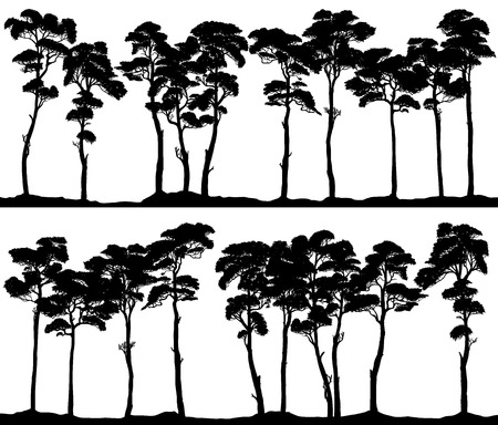 Set of vector horizontal banner silhouettes of coniferous forest (pine-tree,cedar,sequoy).