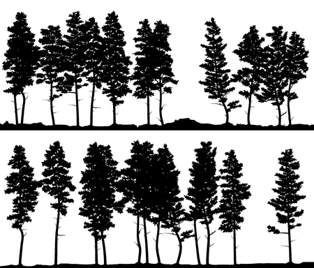 Set of vector horizontal banner silhouettes of coniferous forest on line (pine tree,cedar,sequoy).