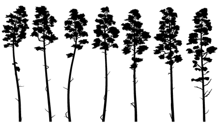 Set with silhouettes of tall pine trees with trunk (cedar). Stock Illustratie