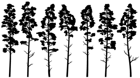 Set with vector silhouettes of tall pine trees with trunk (cedar).