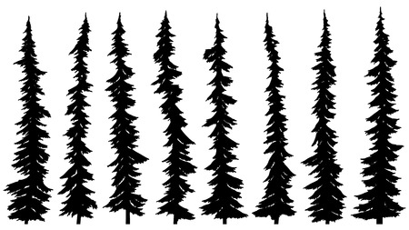 Set of vector black silhouettes of thin tall firs (spruce).