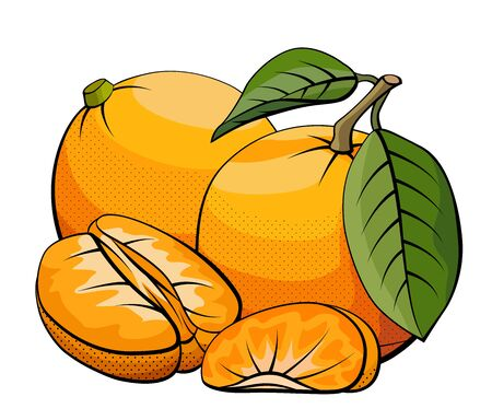 Vector simple illustration of mandarins group with halves on white background.