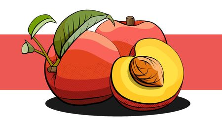 Vector simple illustration of peach fruits group and halves with shadows on red line.