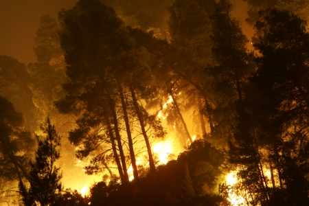 HALKIDIKI, GREECE - AUGUST  23, 2006 : The View of wildfire of forest on August 23 , 2006 in Halkidiki, Greece.