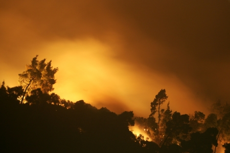 HALKIDIKI, GREECE - AUGUST  23, 2006 : The View of wildfire of forest on August 23 , 2006 in Halkidiki, Greece. Stock Photo - 16205885