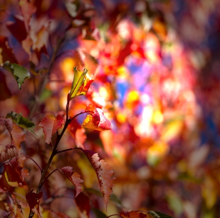 Autumn leaves, very shallow focus Stock Photo - 16183991
