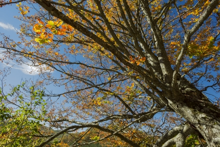 Beech Forest during Autumn Stock Photo - 16184039