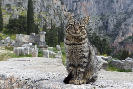 delfi: Cat sitting in ancient column of the Temple of Apollo in Delphi Greece