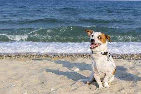 Cute dog on the beach photo