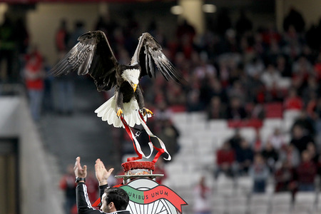 LISBON, PORTUGAL FEB - 27, 2014 : Vitoria the eagle flies around the Estadio da Luz and lands on top of Benfica's club shield, creating a real life version of the club's emblem on February 27, 2014.